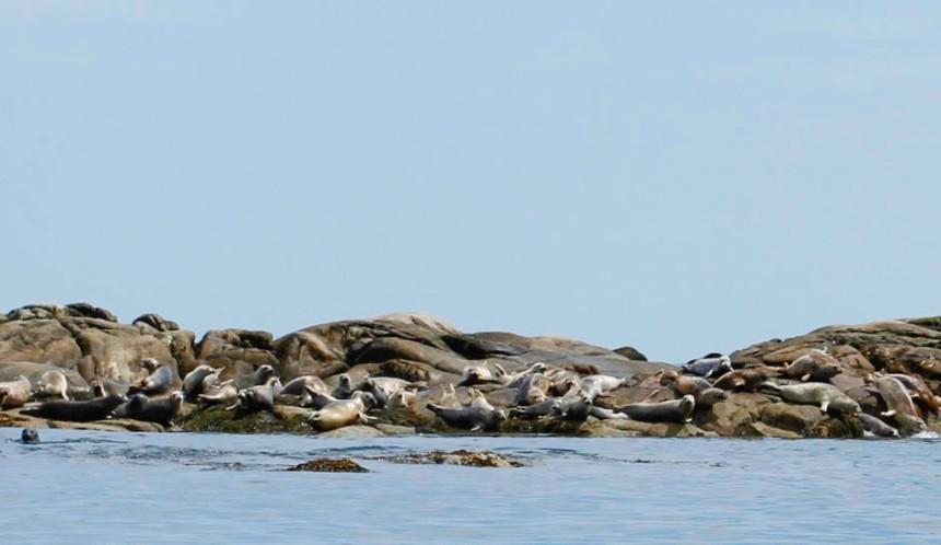 Seal Island Maine