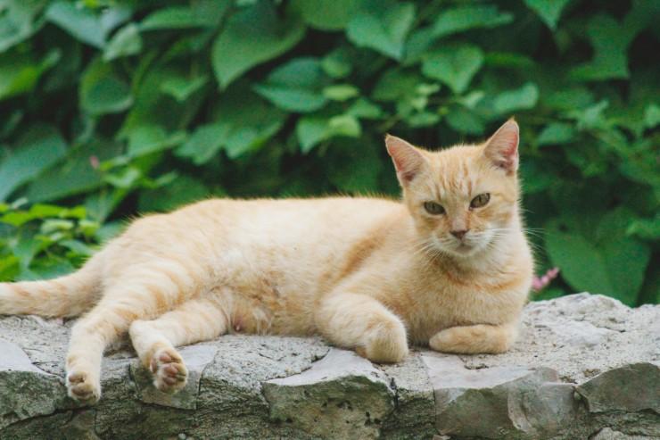 pretty Mommy kitty