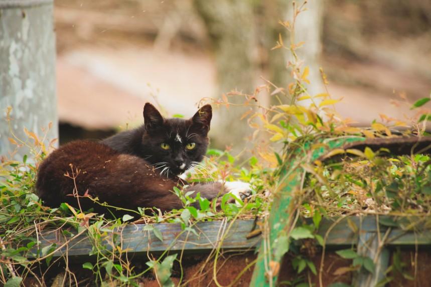 _black cat