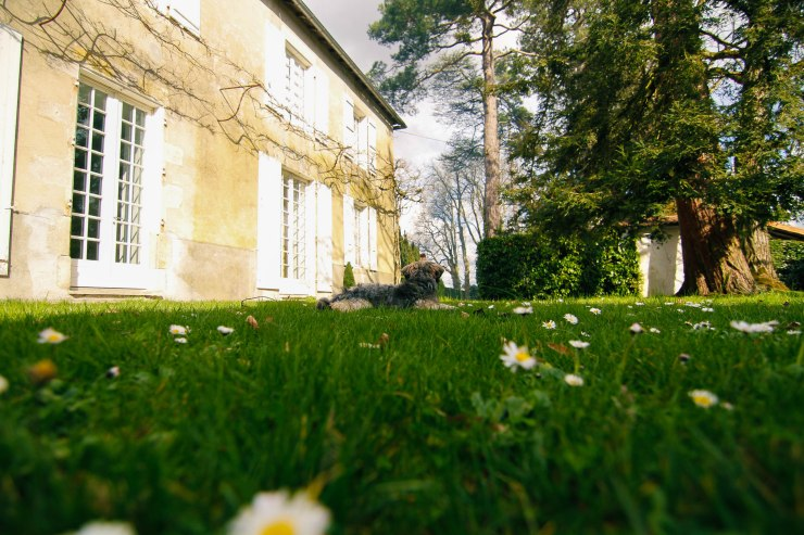 french manor house puppy