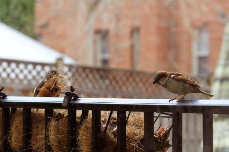 Robin and Chickadee